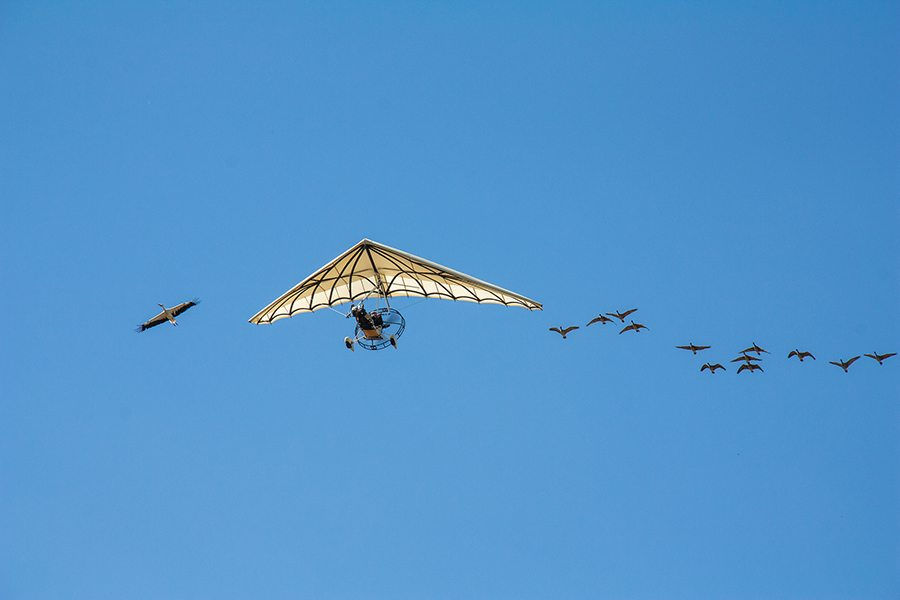 Ultralight hand glider flying with odd birds following